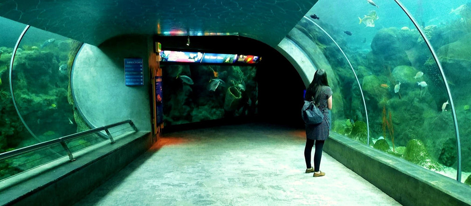 The Florida Aquarium In Tampa Bay Makes Social Distancing Top Priority