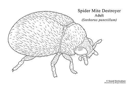 Spider Mite Tri-pack
