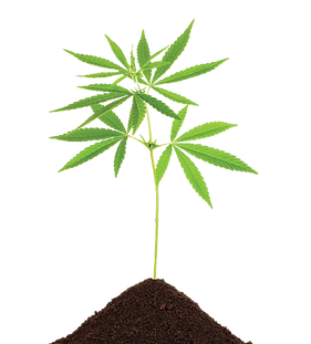 png plant.png