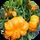 Thumbnail: Odla med barn hemma/balkongen - frön och märkpinnar i en väggförvaring