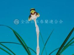新世紀  Shinseiki