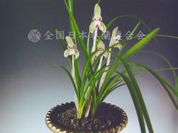 花かまきり  Hanakamakiri