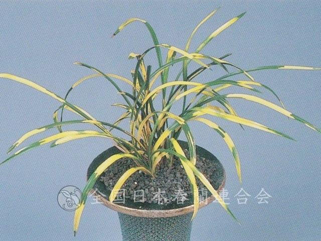 赤城の花  Akaginohana