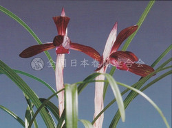 紫禁城  Shikinjyou