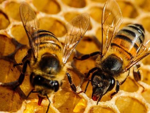 O mundo sem abelhas não existia