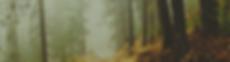 Wald Homepage.png