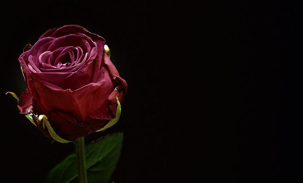 rose-1460766_1920.jpg