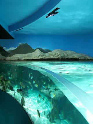 Aquarium de La Rochelle .jpg