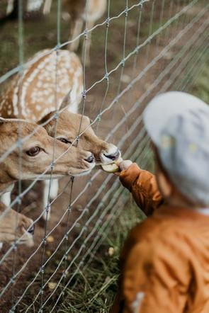 parc animalier.jpeg