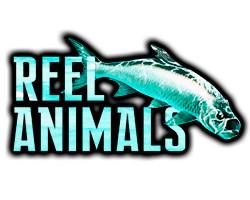 Reel Animals.jpg