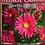 Thumbnail: Autumn Aster USA Village Candle Wax Crumble Pot
