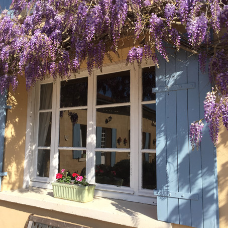 Our Wonderful Wisteria