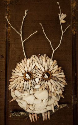 Sea Shell Owl
