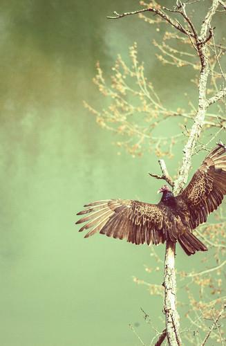 birdy 2 lr.jpg