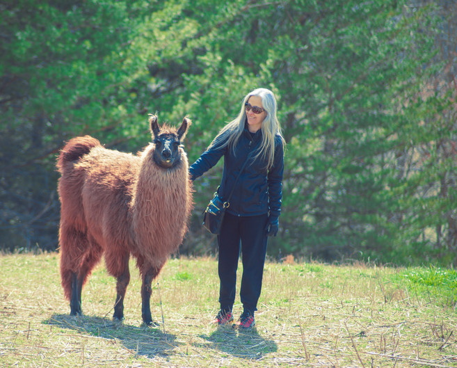 The Wandering Llamas Hike