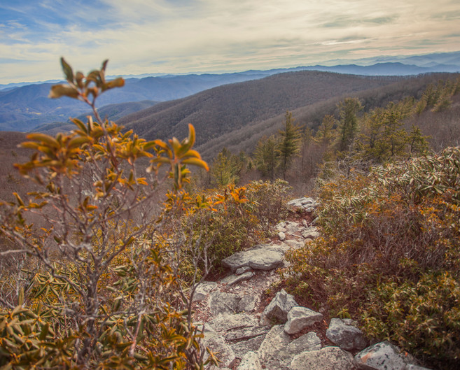 Round Knob to the Appalachian Trail