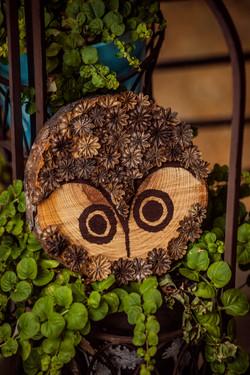 Poppy Owl