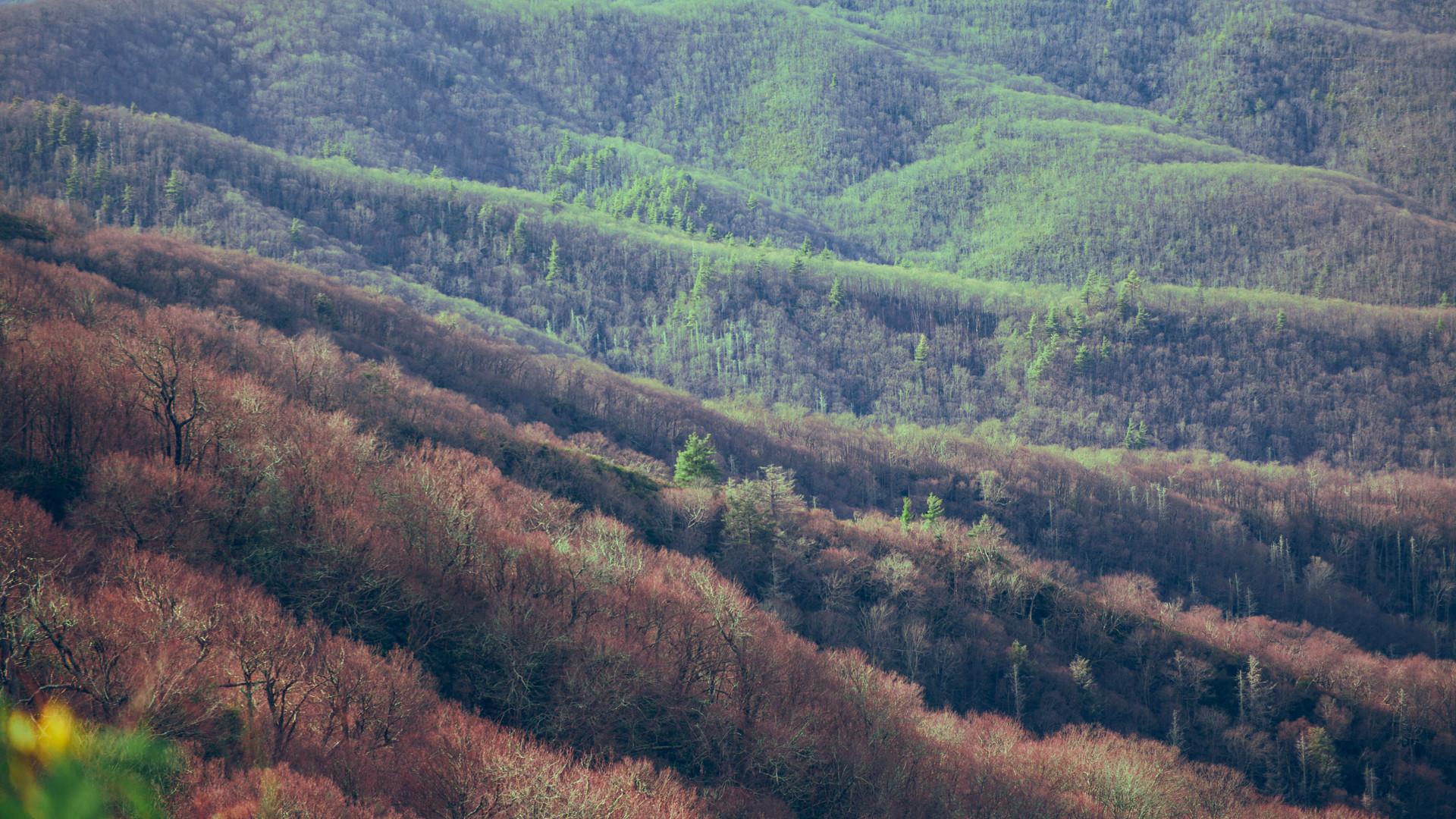 Round Knob to the Appalachian Trail