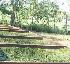 Orchard del Sol Costa Rica Whole Black Peppercorns Black Pepper