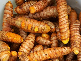 Turmeric, 2017 ~ Ramblings of The Pepper Lady