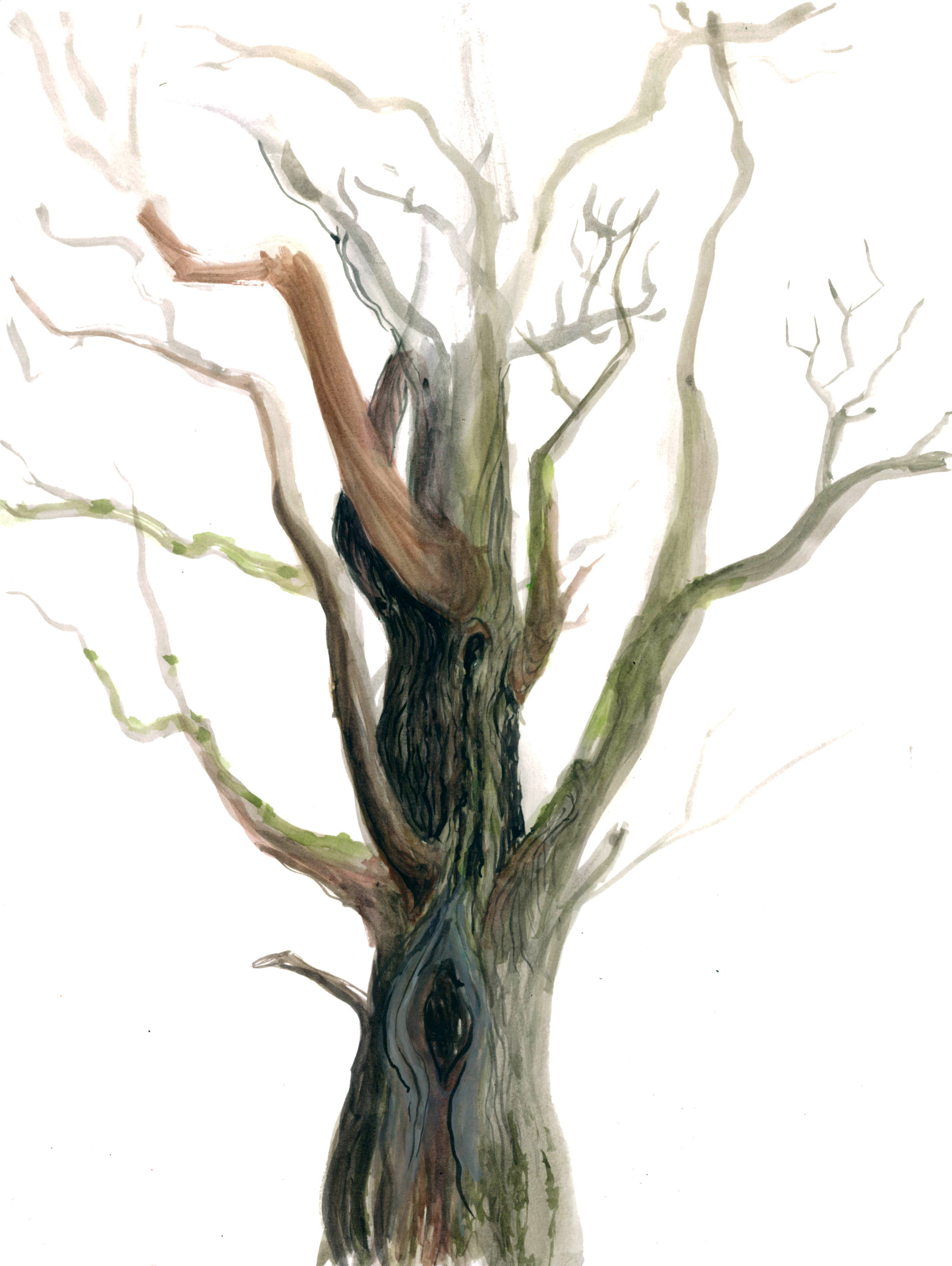 Old Tree - Work in Progress