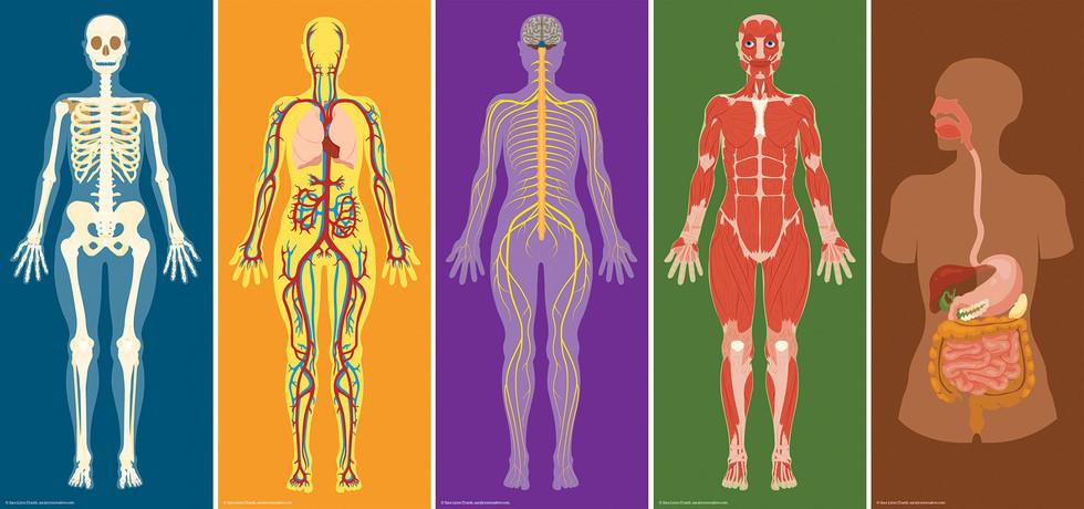 human-body-illustration-157793-2425679.j