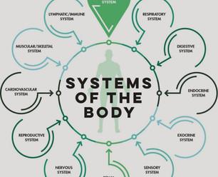 Body-Systems-985x1024.jpg