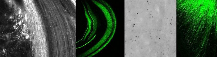 microscopy panel.jpg
