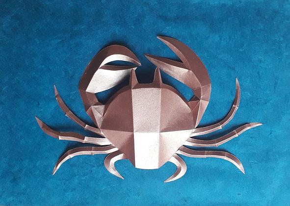 morgane veyssiere,  crabe cuivré
