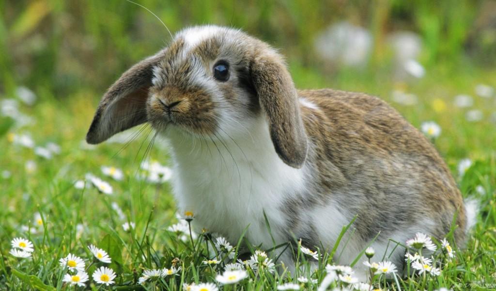 Rabbit Care Information
