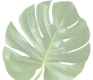 vip-leaf-2-1024x885_edited.jpg