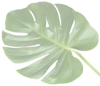 vip-1-leaf-1024x885_edited.jpg