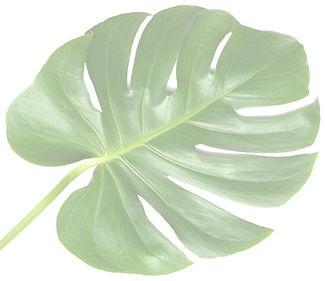 vip-leaf-3-1024x885_edited.jpg
