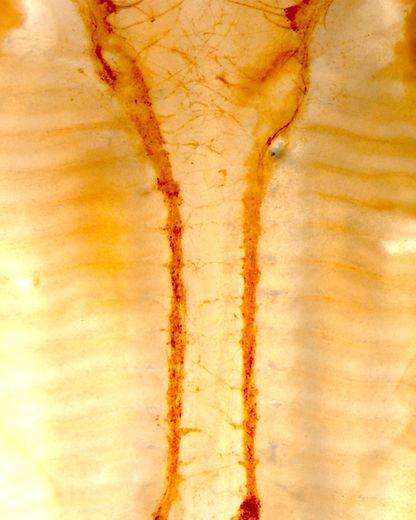 JN-RM-2730-19_Coverart4_Figure6B.jpg