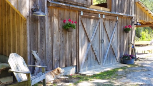 Picture of the barn with Molly laying out front.jpg
