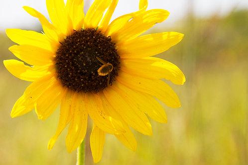 Sunflower Kitchen Board
