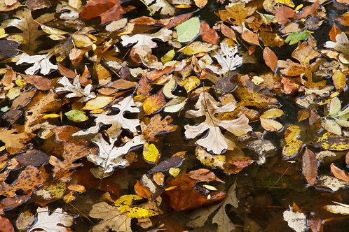 Fallen Leaves Kitchen Board