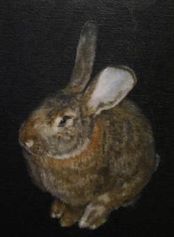 big bunny Buzz