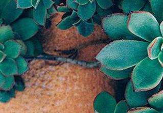 Fraîcheur printanière