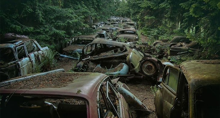 abandoned-cars-in-a-forest-link-to-more-