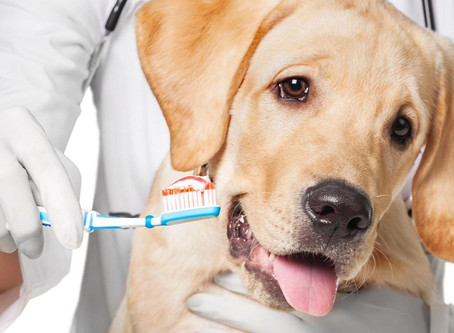 Odontologia Pet na Poa PetCare