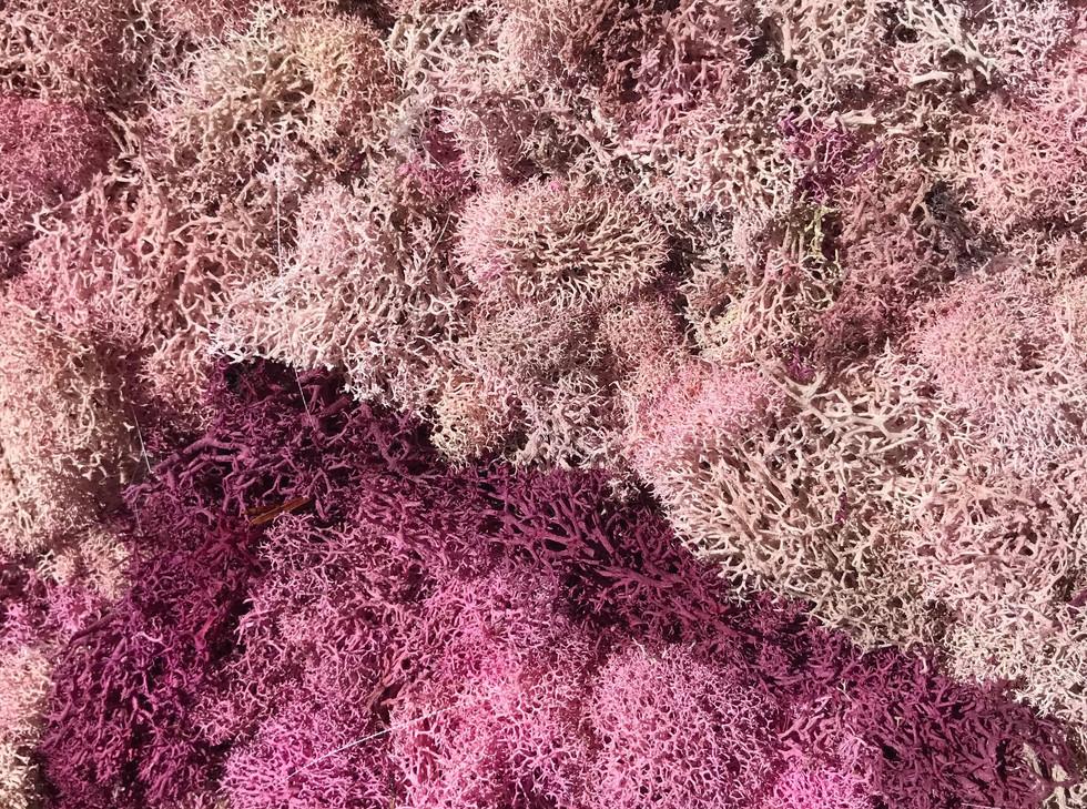 Multi coloured pink tones