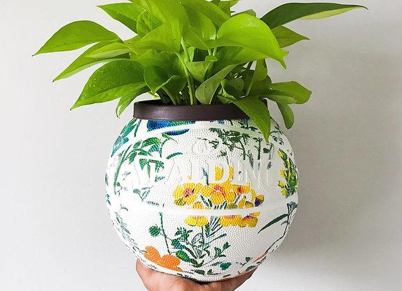 Planthony Davis (No Plant)