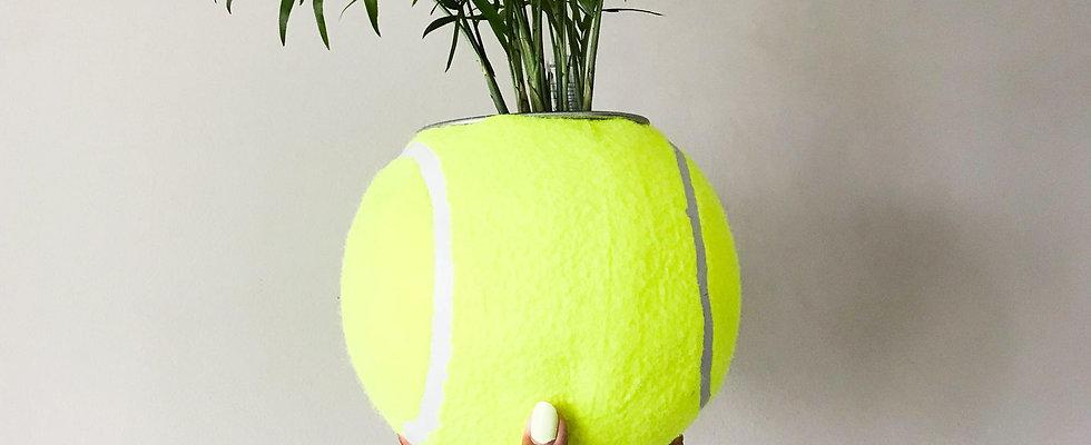 Naomi Ossucculent (Giant Tennis Ball)