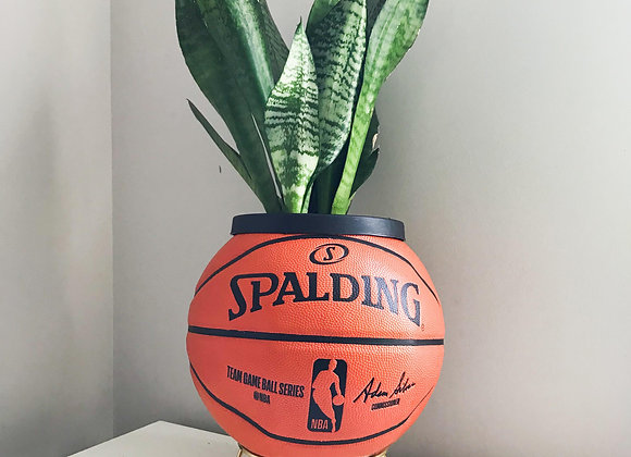 Vince Carrot (Ball, Stand + Plant)