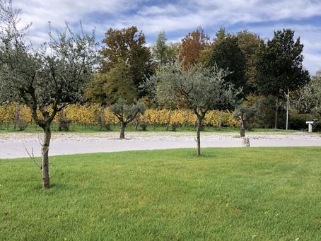 BiancaVigna - Passion für Wein und Region