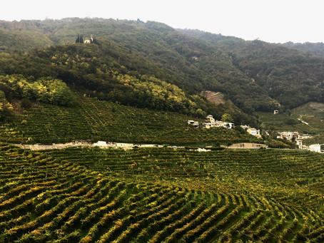 das Weinanbaugebiet Conegliano & Valdobbiadene