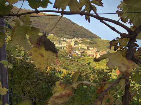 Urlaubstipp: die Strada del Prosecco