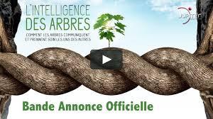 Film débat « L'intelligence des arbres » au Normandy