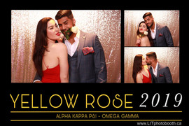 Yellow Rose 2019